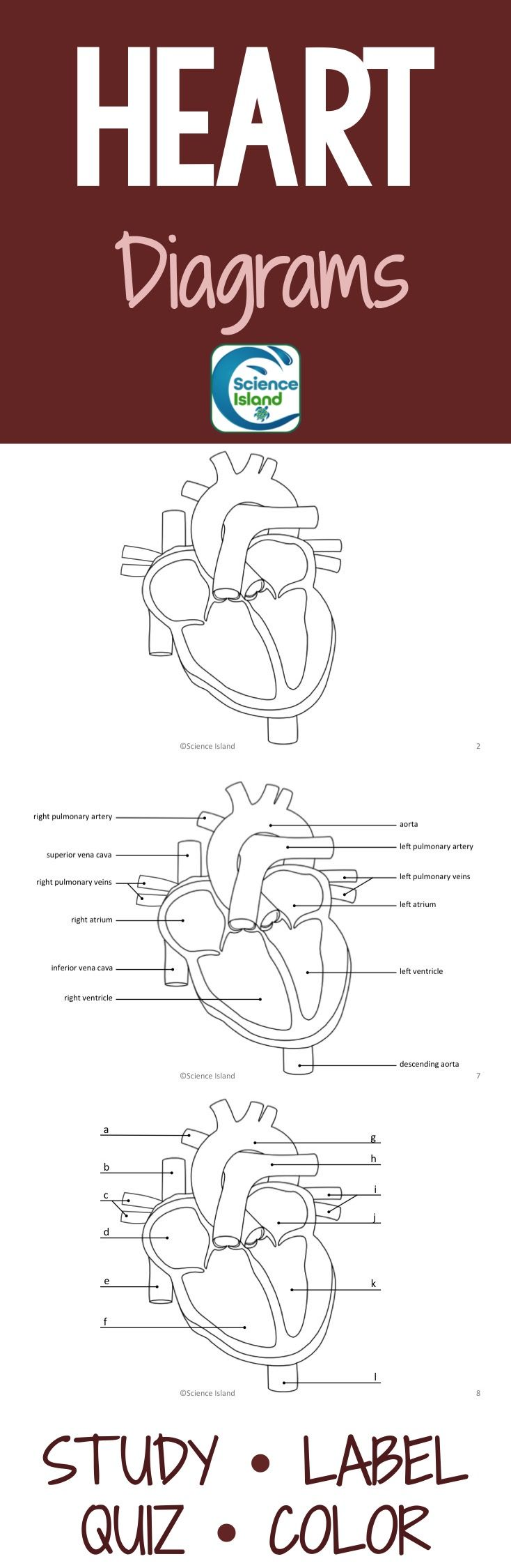 heart diagrams: anterior and frontal section with quizzes | anatomy