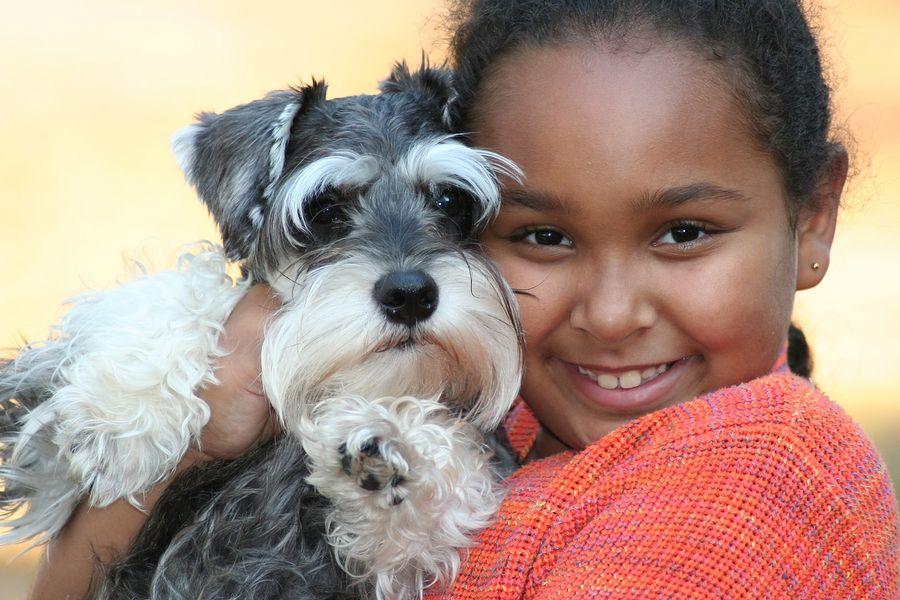 Schnauzer Rescue Of Texas Greater Houston Area Puppies Cute Dogs Miniature Schnauzer Puppies