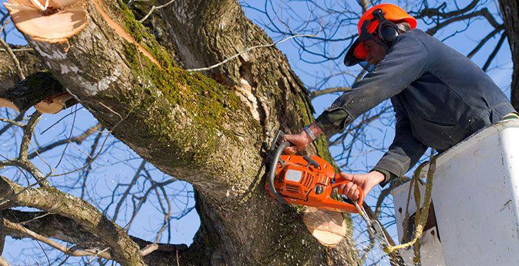 Pin on Quality Tree Procedures