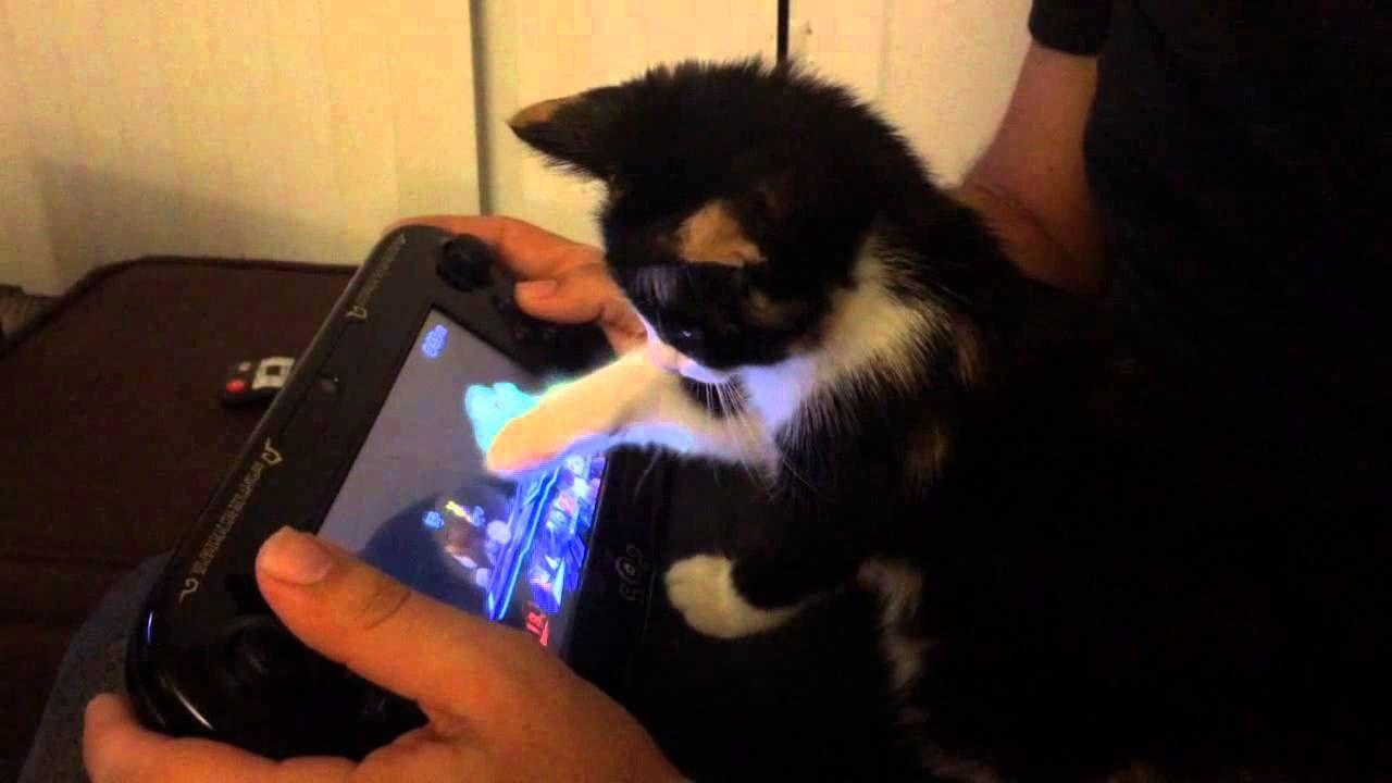 Adorable Kitten Attempts To Play Super Smash Bros Using The Nintendo Wii U Gamepad Kitten Love Super Smash Bros Adorable Kitten