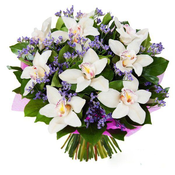Воздушные орхидеи - Florpro | Цветы, Орхидеи, Орхидея
