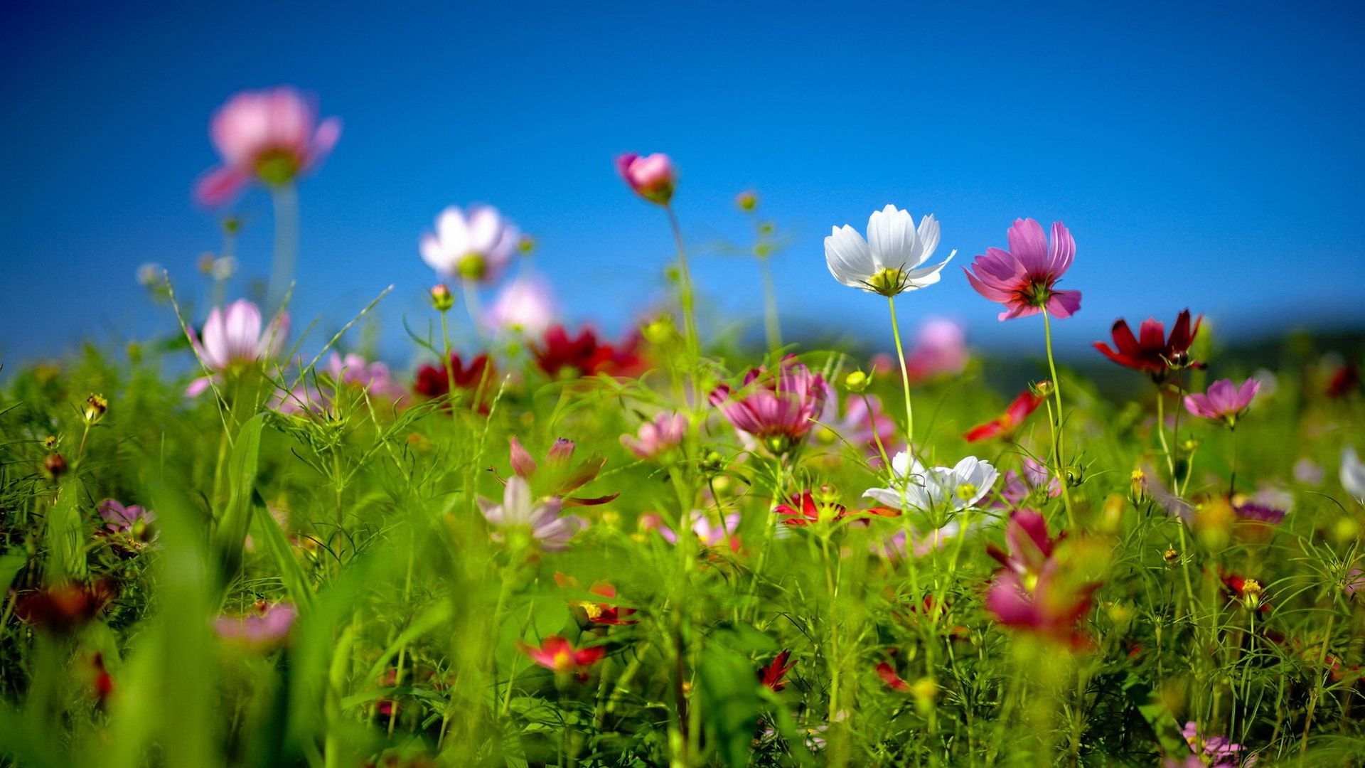Free Spring Desktop Wallpaper |     Download free Spring