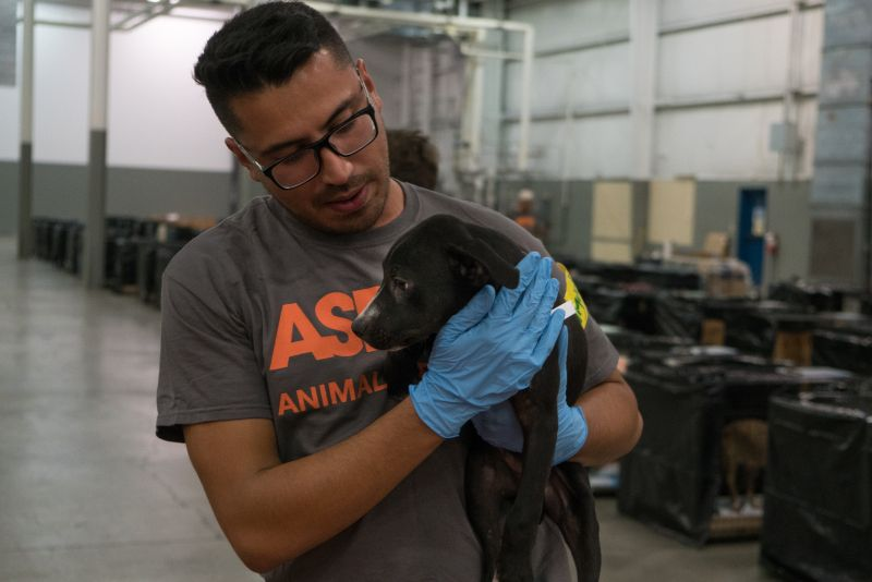 Donate to emergency animal shelter in duncan after irma