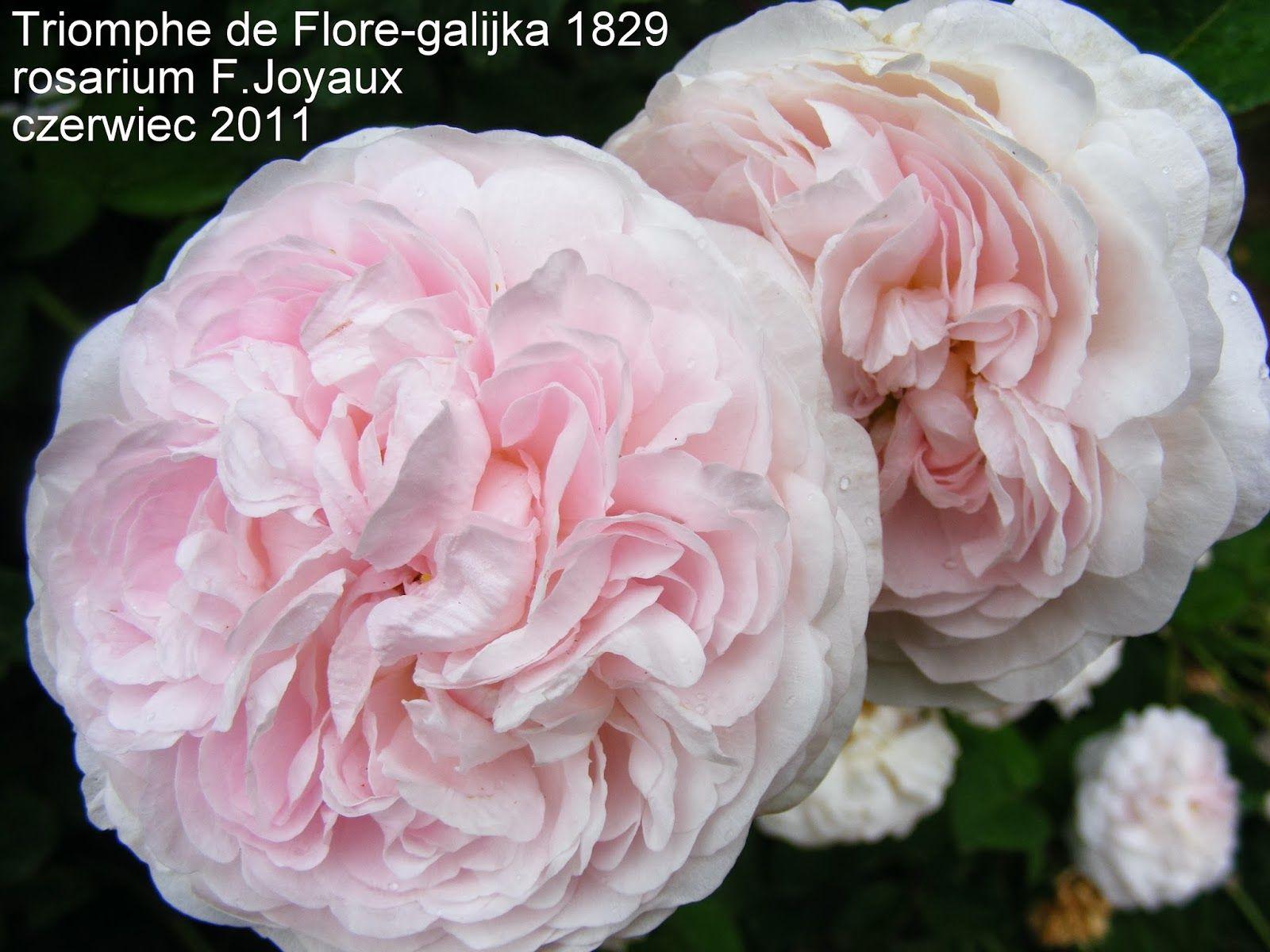 Triomphe de Flore