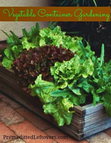 Best 25 container garden ideas on pinterest growing - Best vegetables for container gardening ...