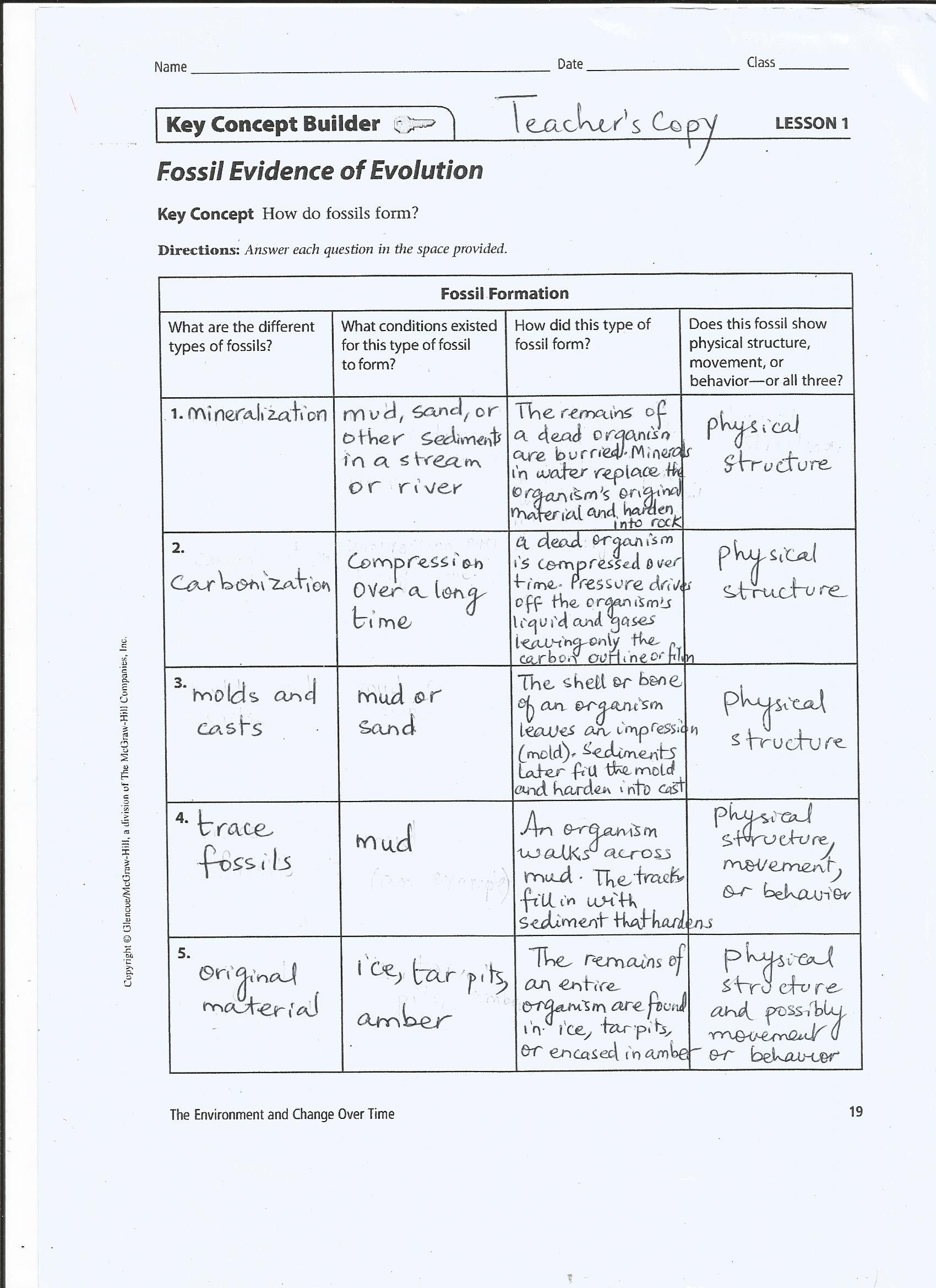 Readableofficial Evidence Of Evolution Worksheet Answers