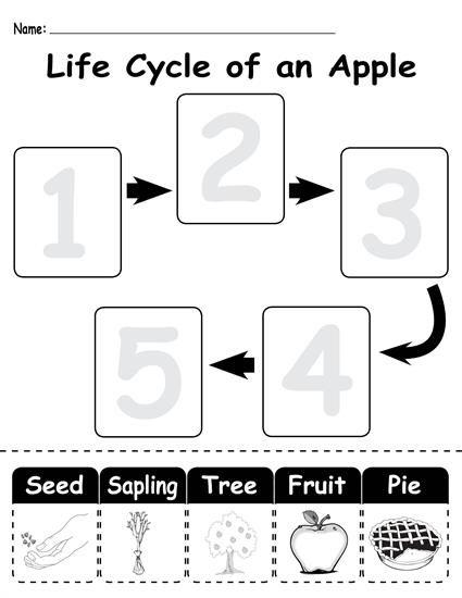 Life Cycle Printable Worksheets. 25+ fun life cycle