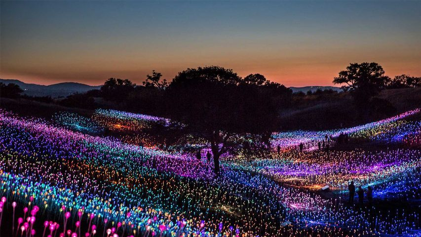 'Field of Light at Sensorio,' by Bruce Munro, Paso Robles