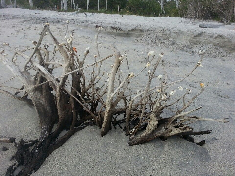 Stump Pass Beach State Park in Englewood, FL (With images ...
