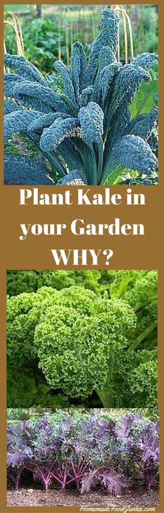 Plant Kale in your Garden. Here's why you want to grow it ... Companion Planting Kale