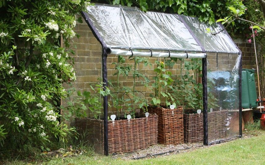 a lean-to greenhouse - need a handy man now