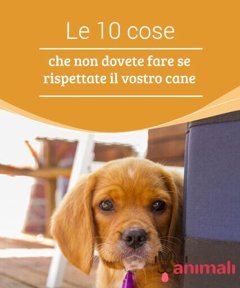 Le 10 cose che non dovete fare se rispettate il vostro for Cani che non vogliono fare il bagno