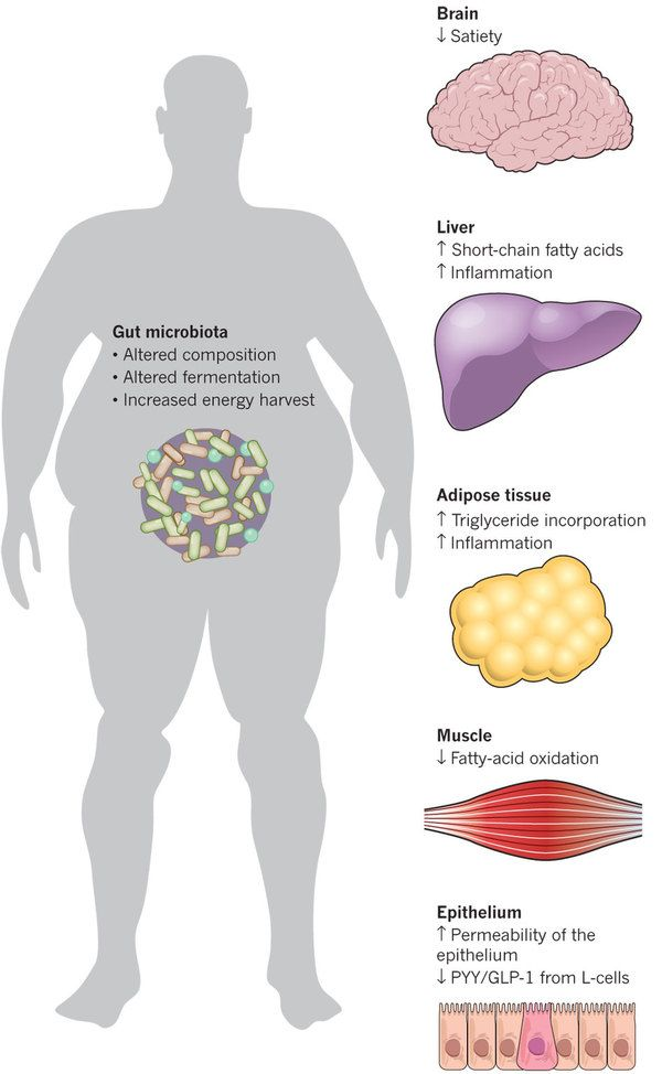 Obesity, fatty liver disease and intestinal microbiota