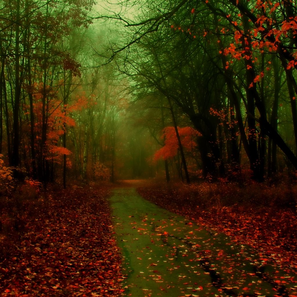 Misty Autumn iPad Air Wallpaper Download for both