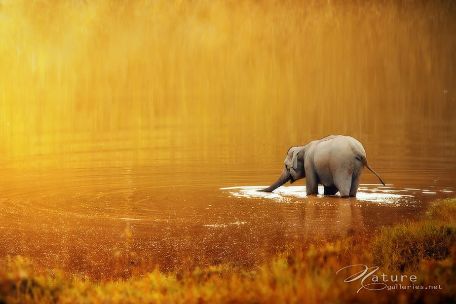Heartwarming Elephant Photography   Abduzeedo Design Inspiration