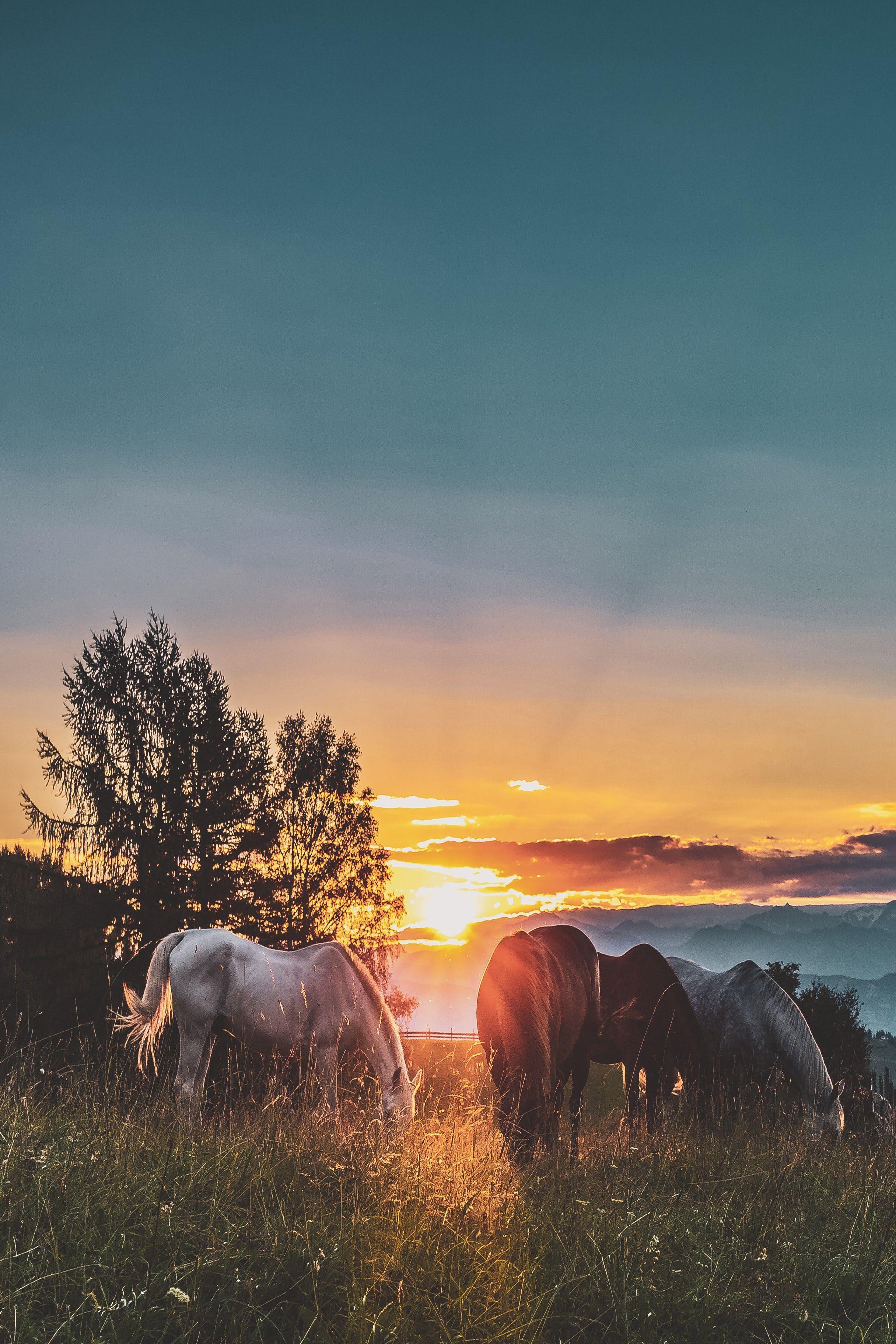 Gorgeous Horses On Unsplash Cowgirl Magazine Horse Wallpaper