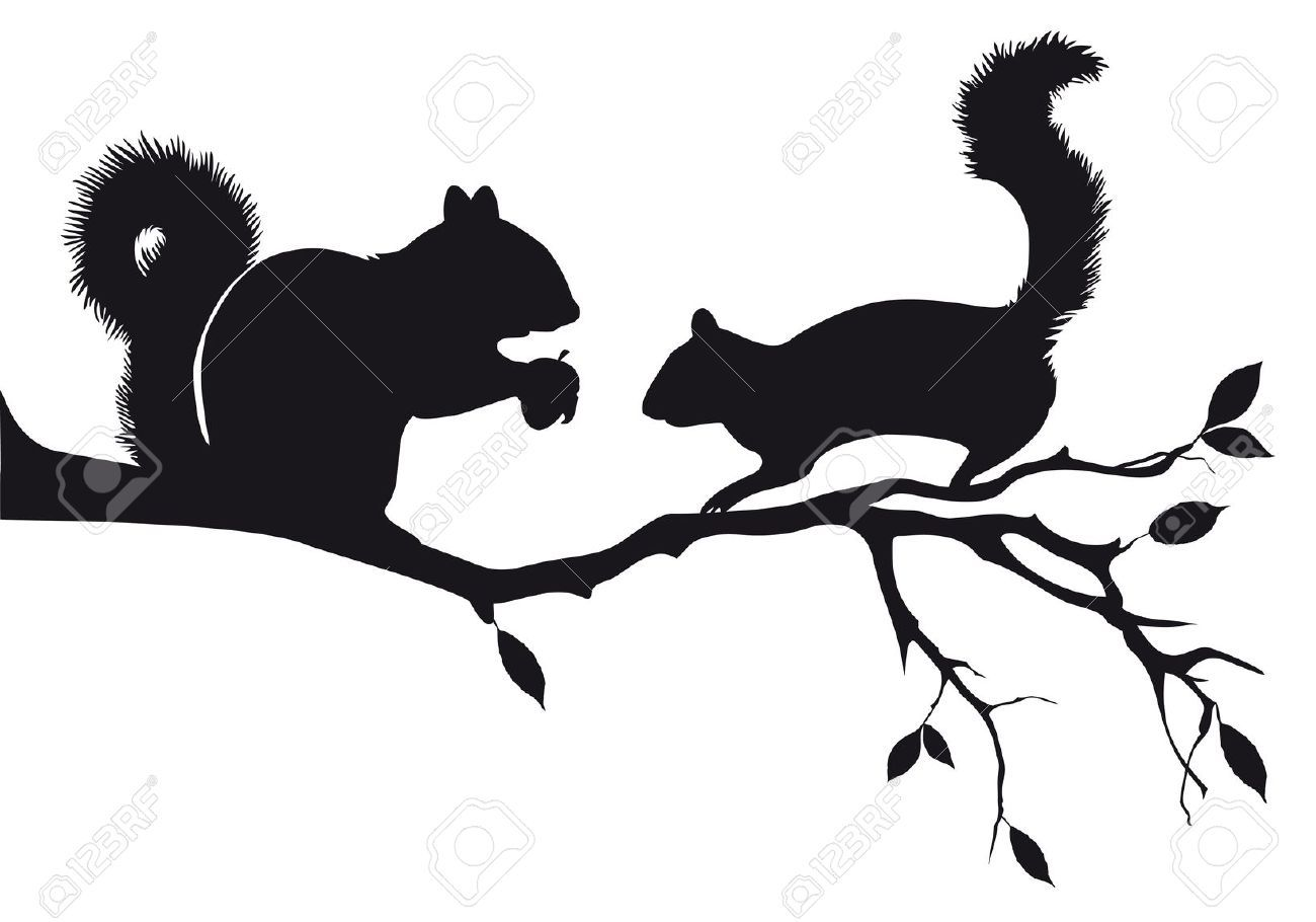 Squirrel Stock Illustrations, Cliparts And Royalty Free