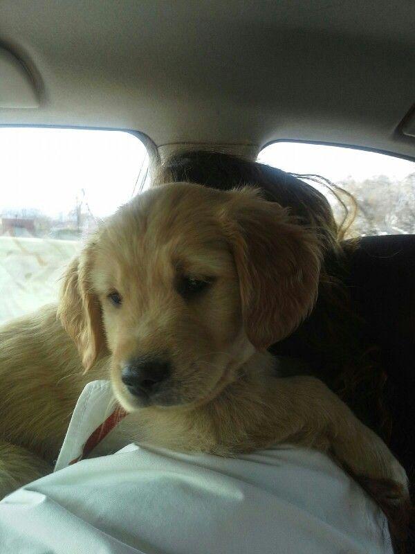 My new puppy Gus!!