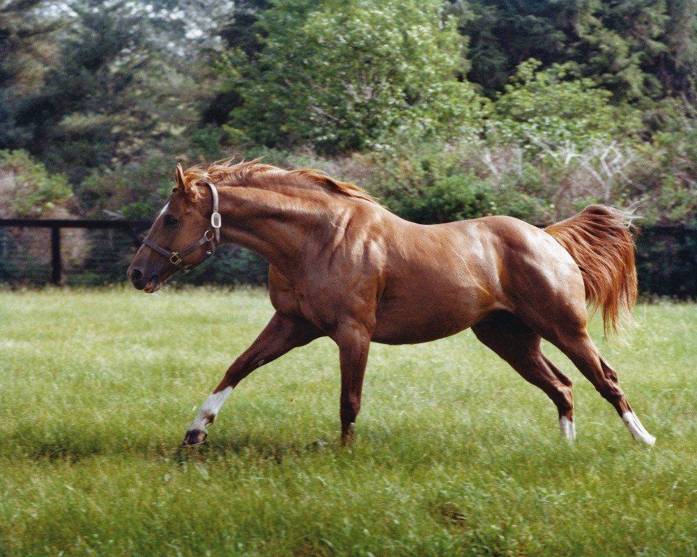 Secretariat Running   Horse, Race horses and Thoroughbred ...  Secretariat Run...