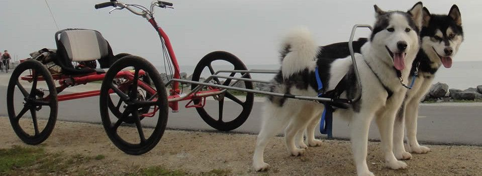 Sacco Dog Carts Dog Cart Sacco Dog Cart Official Site Urban