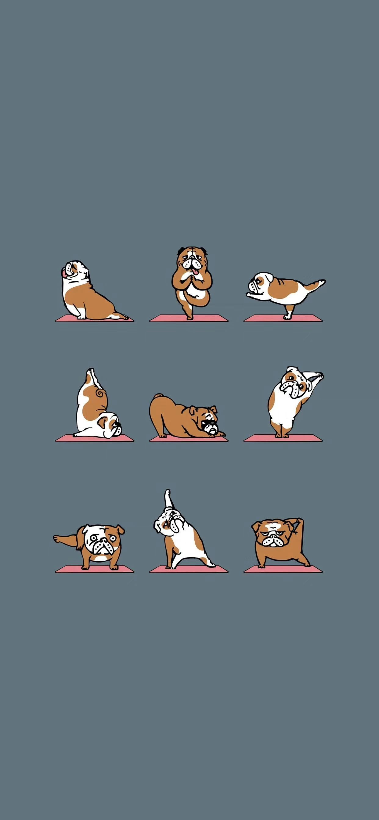 Pago Wallpaper Funny Wallpapers Cute Backgrounds Iphone Wallpaper Yoga Funny pug doing yoga iphone wallpaper