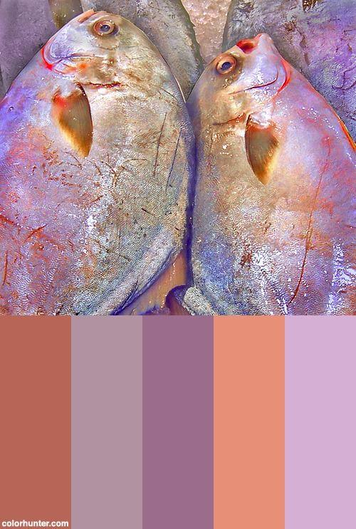 Twins Color Scheme