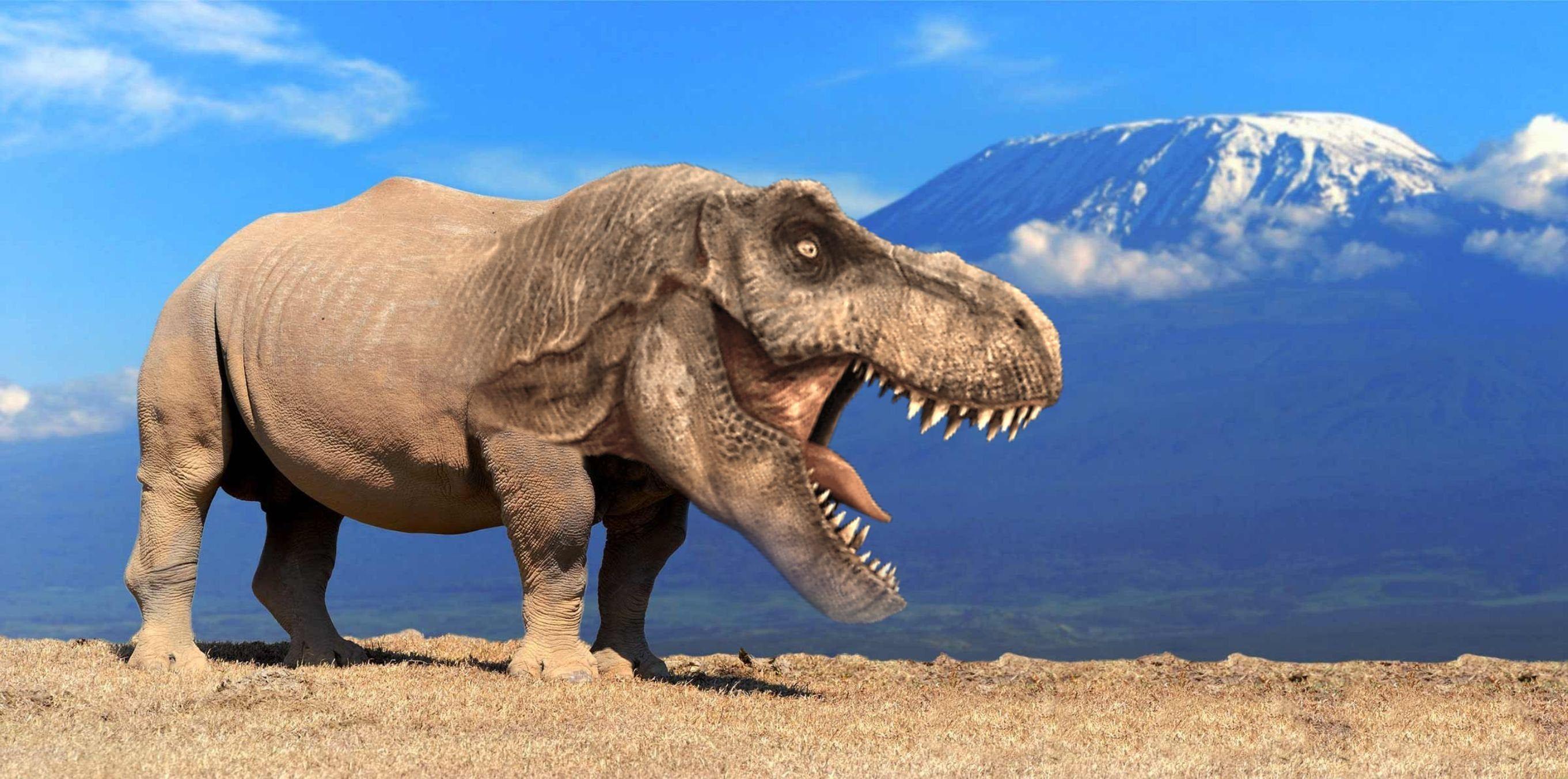 rex #TRhinosaurus T-Rhinosaurus Rex   Rex, 10 points, Duck