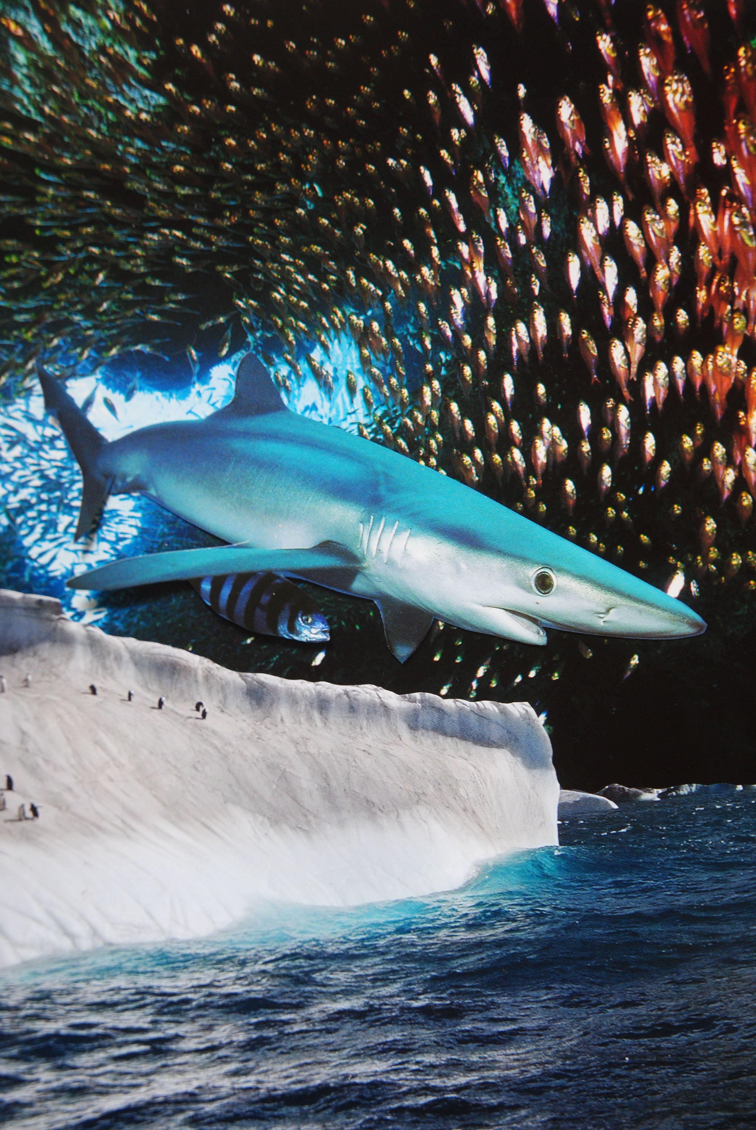 Blue shark john turck collage original collage photo