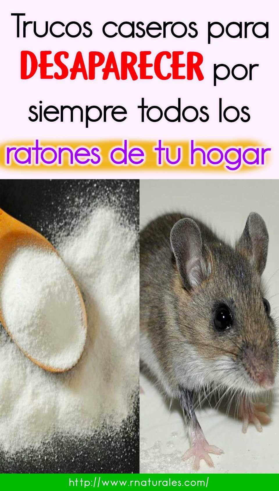 Como Acabar Con Las Ratas En El Jardin Trucos Caseros Para Desaparecer Por Siempre Todos Los Ratones De