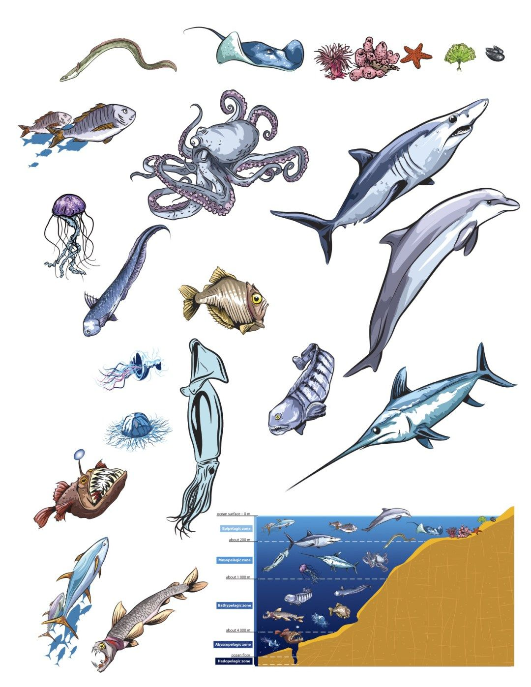 photo about Ocean Animals Printable named Ocean Zones Poster (with Free of charge Creature Printable) Ocean