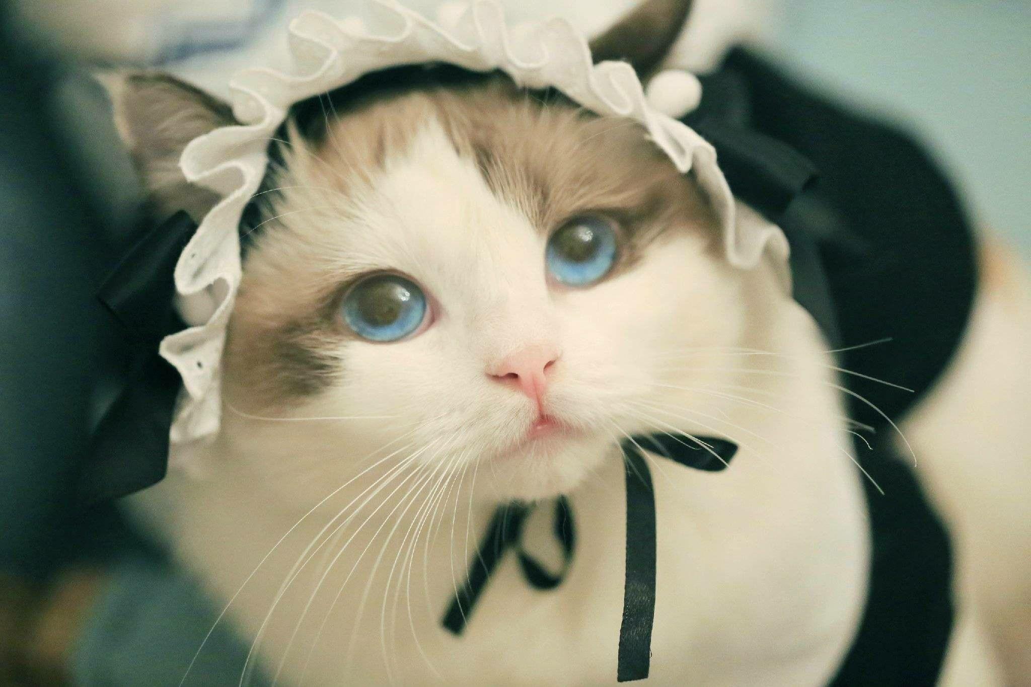 We Are Looking For Virgin Hair Distributors Worldwide Email Hezhianzhianhe Gmail Com Tel Whatsapp 86 166 0374 0829 Pet Cute Cats Cute Animal Photos Cats