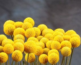 Billy Ball Bunches Crespedia Etsy Wholesale Flowers And Supplies Wholesale Flowers Billy Balls