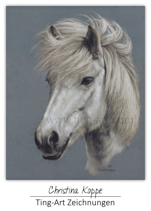 Drawing Draw Zeichnen Zeichnung Art Kunst Pony Pferd Islander Schimmel Pferdebilder Pferdezeichnungen Tiere Malen