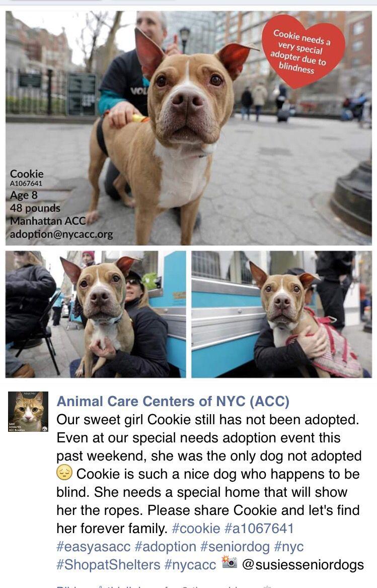 Pin By Joke Traanberg On Adoptable Pets Animals Pet Care Adoption