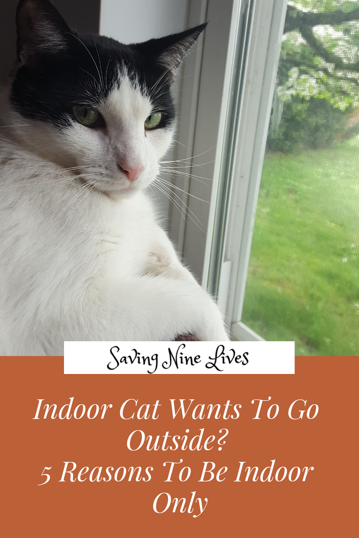 Learn Why It Is Safer For Your Cat To Stay Indoors Only Indoor Cat Cats Cat Facts