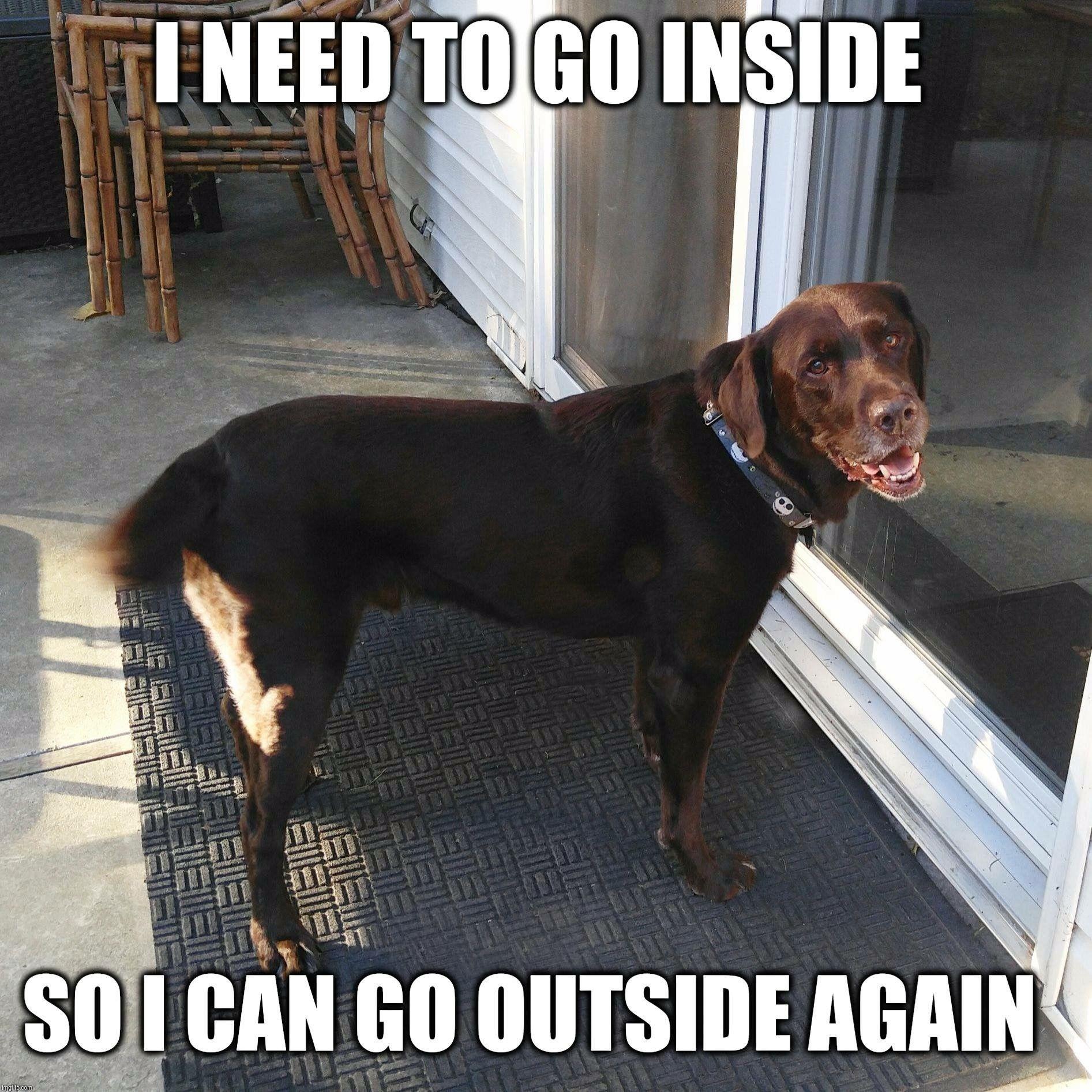 Lol Funny Dog Funny Dogs Funny Dog Memes Funny Animals