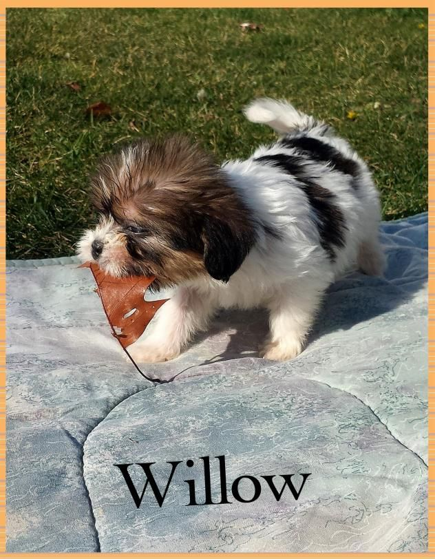 Adopt Willow Adopted On Pet Adoption Dogs Dog Cat