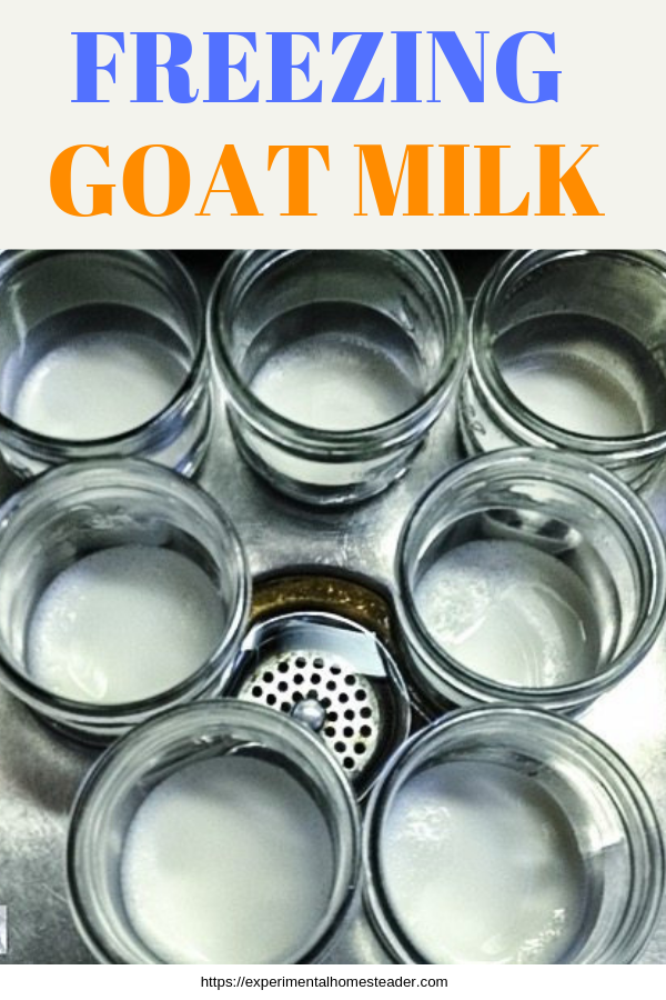 How To Start Freezing Goat Milk  Ihh Goats  Goat Milk -5887