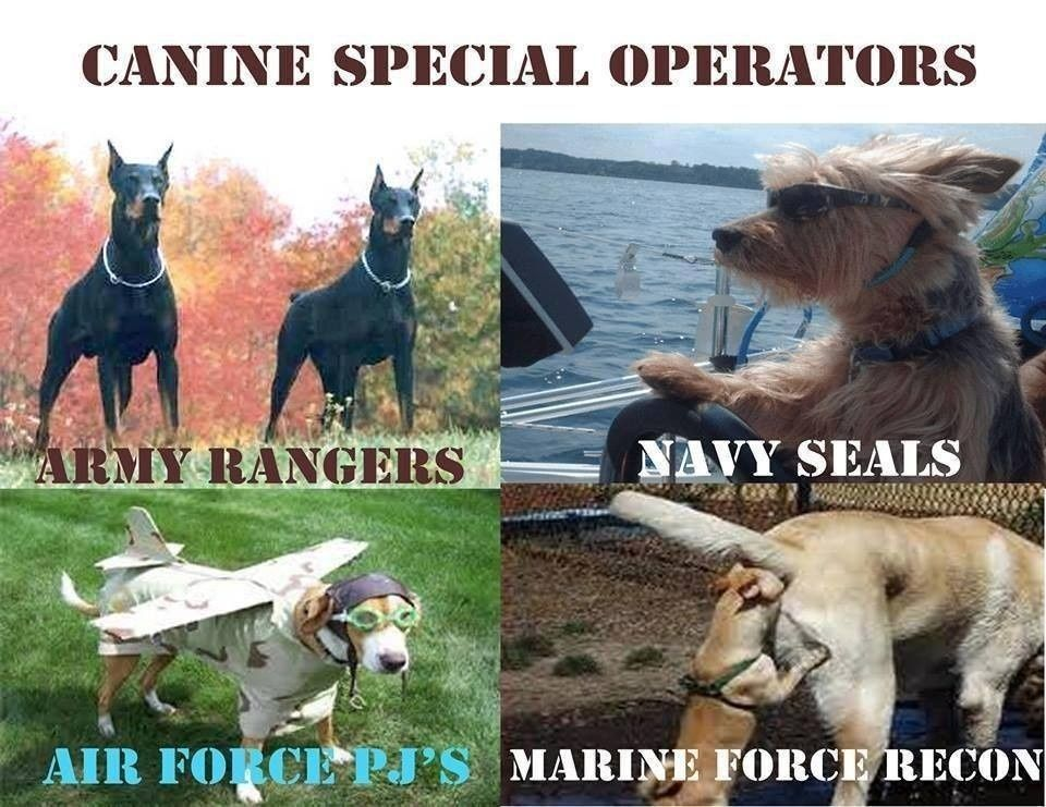 11 military dog memes that are flatout funny AF