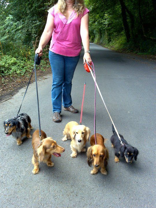 Devon Deluxe Dachshunds Owners Of Miniature Longhaired Dachshunds