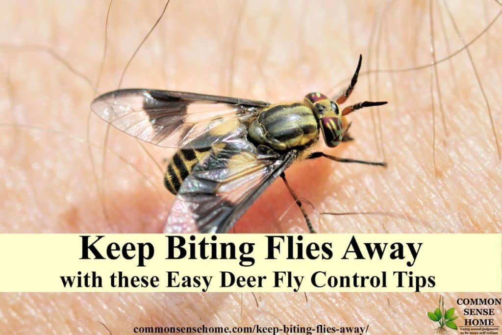 Deer fly control deterrent tips to keep biting flies