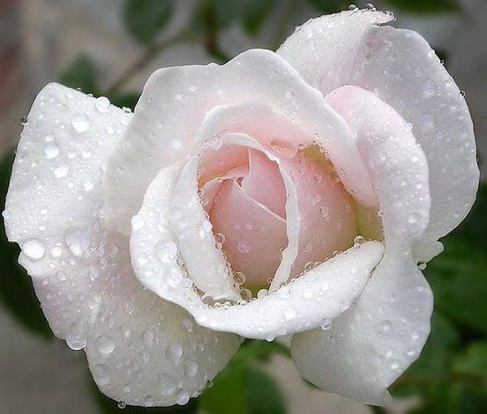 Harika Otesi Gul Resimleri Hareketli Gul Resimleri Sanalhazinem Size Yeter Beautiful Flowers Rare Flowers Strange Flowers