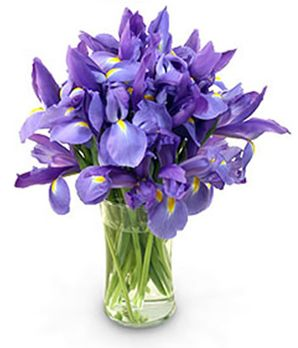 Tulip Delight At From You Flowers Blue Iris Flowers Birthday Flower Delivery Online Flower Delivery