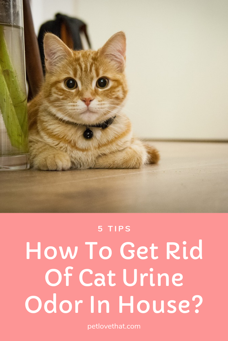 5 Tips How To Get Rid Of Cat Urine Odor In House With Images
