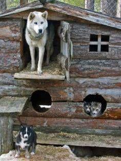 Outdoor Dog House Husky Dogs Siberian Husky Cute Animals