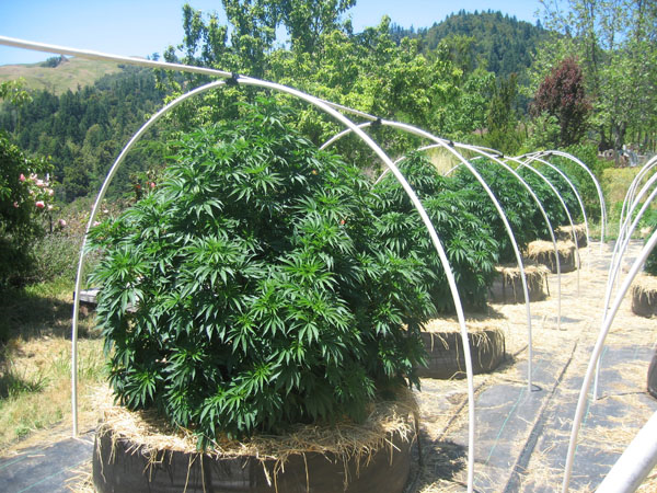 http://cannapowerseeds.com/wp-content/uploads/2016/02/Comment ...