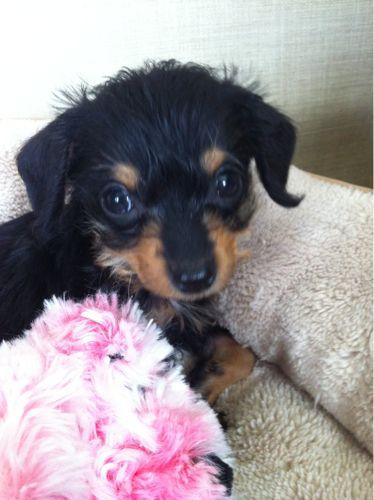 My bff got a dog she is sooo cute her name is Maybel!!