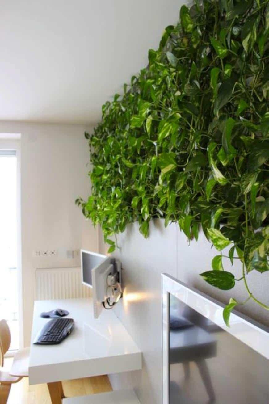 Eye Catching Indoor Climbing Plants In 2020 Indoor Climbing Plants Wall Climbing Plants Plants