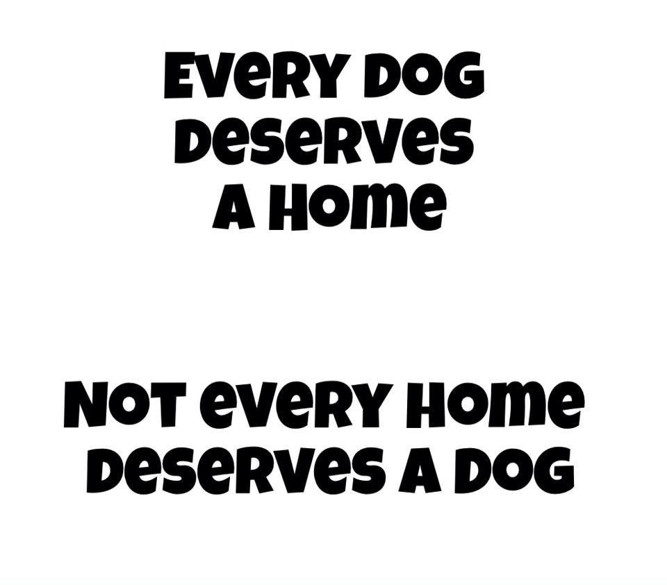 I Love My Dog Quotes Every Dog. Dog Animal And Doggies