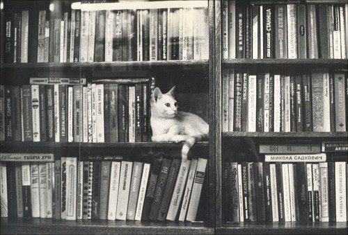 kitty bookend
